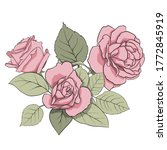 vector composition of delicate... | Shutterstock .eps vector #1772845919