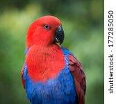 parrot bird portrait | Shutterstock . vector #177285050