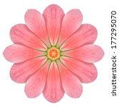 Pink Hydrangea Kaleidoscopic...