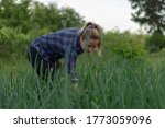 young woman farmer  picking...