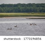 Canadian Geese on Phantom Lake in Crex Meadows State Wildlife Area.
