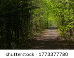Summer Pathway In Green Forest...