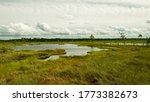 landscape from swamp, sunny summer day with bog vegetation, trees, mosses and ponds, cloudy sky, Nigula bog, Estonia
