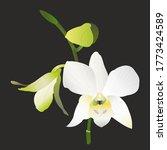 single white orchid flower ... | Shutterstock .eps vector #1773424589