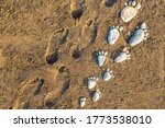 Human Footprints In The Sand...