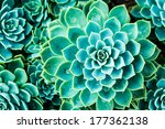 Cactus In Queen Sirikit Botani...