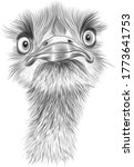 head of the ostrich sketch... | Shutterstock .eps vector #1773641753