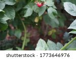 Spider On The Web On Raspberry...