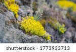 Yellow Flowers Growing From The ...