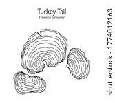 turkey tail mushroom  trametes... | Shutterstock .eps vector #1774012163