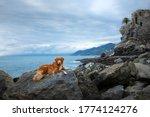 Dog On The Sea. Nova Scotia...