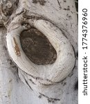 Tree Trunk Knot. Close Up Of...