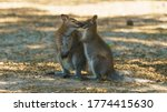 Small photo of Image of couple of gray kangaroo. Bennett's wallaby in sunny summer. They sniff each other. Animals caress each other like wife and husband. High relationship between animals. High resolution image.