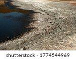 Tracks In Mineral Encrusted Mu...