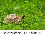 Nice Turtle On The Walk Through ...