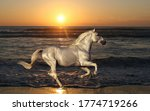 Majestic Silver Horse Galloping ...