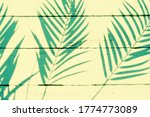palm tree shadows on yellow...   Shutterstock . vector #1774773089