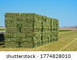 Alfalfa Hay  Grown  Baled ...