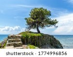 Lonely Olive Tree On The Rock...