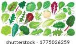 Lettuce And Salad Cartoon...