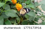 Colourful Butterfly On An...