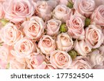 Stock photo bright pink roses background 177524504