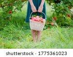 Girl Holding A Basket Full Of...