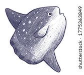 Sketch illustration of a Mola Mola Ocean Sunfish