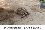 The Process Of Mating Turtles...