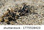 Starfish Shell  Sand  Seaweed...