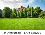 Freshly Cut Grass In The...