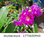 a image of pink flower with... | Shutterstock . vector #1775650943