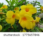 a image of yellow flowers with... | Shutterstock . vector #1775657846