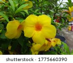 a image of yellow flowers with... | Shutterstock . vector #1775660390