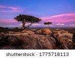 Wild Plum Tree Landscape In...