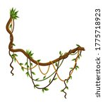 twisted wild lianas branches...   Shutterstock .eps vector #1775718923
