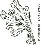 Cowslip Vector Illustration....