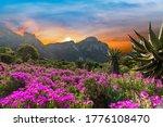 Kirstenbosch National Botanical ...