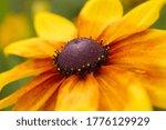 Colourful Summer Flower Close...