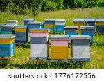 Colorful Hives Of Bees On A...