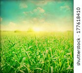 green grass field blue sky and... | Shutterstock . vector #177618410