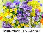 Wild Vivid Flowers In Summer...