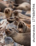Cape Cross Seal Colony At The...
