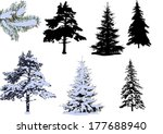 illustration with pines and...