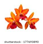 Orange Orchid Isolate