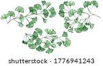 ginkgo biloba known as the...   Shutterstock . vector #1776941243