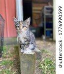 Nala The Sweet Barn Cat
