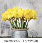 Daffodils In Silver Watering...