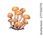 vector hand drawn mushrooms....