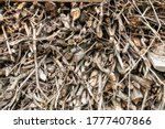 Heap Of Dry Wooden Twig...